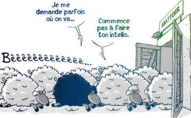 mouton intello