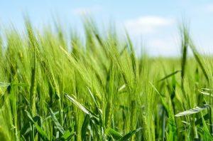 exonération taxe foncière terrain agricole